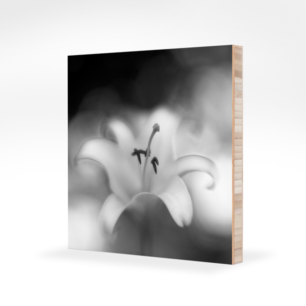 Photograph Of Jon Witsell's Botanica Obscura Image Mounted On A Plywerk Bamboo Panel