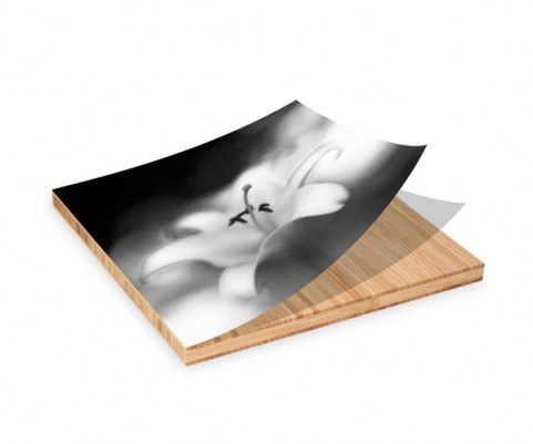 Photo Of Jon Witsell's Botanica Obscura Image Mounted On A Plywerk Bamboo Panel For An Upcoming Photo Exhibit