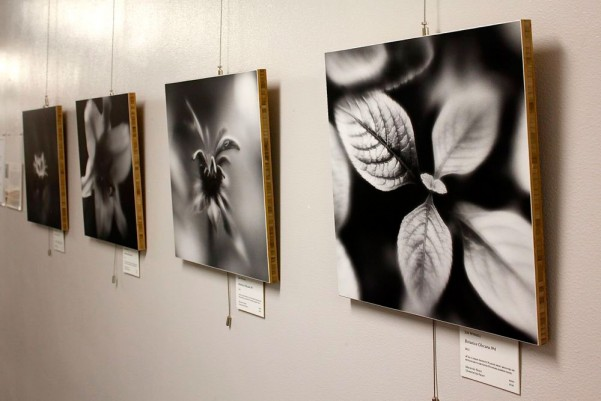 Photo of Botanica Obscura Print Exhibit At North Puget Cancer Center at United General Hospital