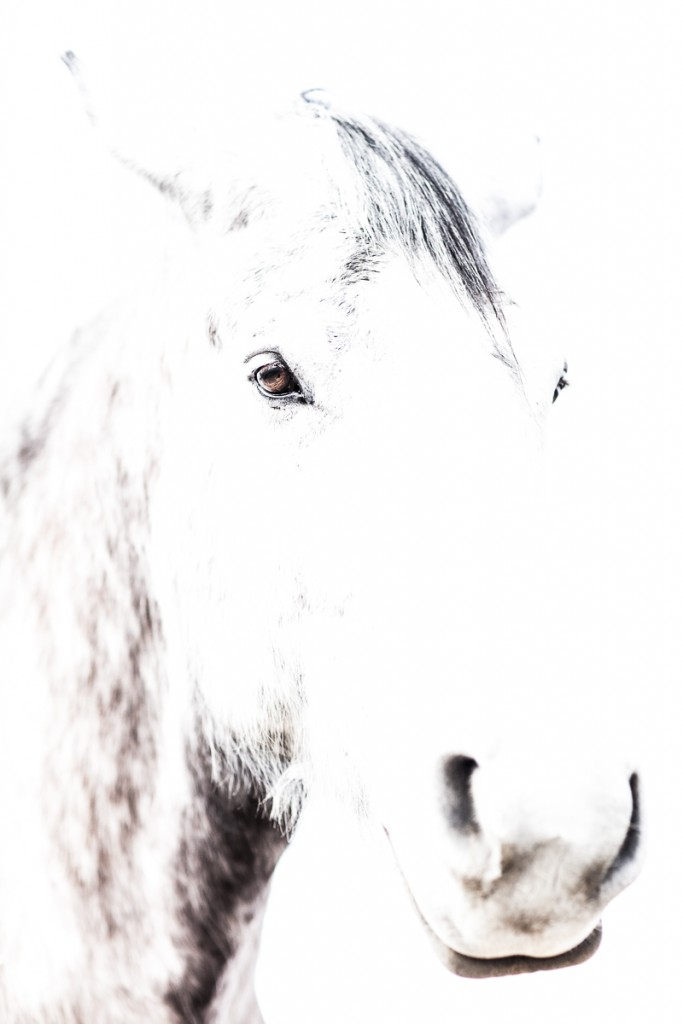 Equine Photography of Mayday #18.
