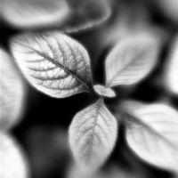 Botanica Obscura #4