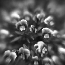 Botanica Obscura #5