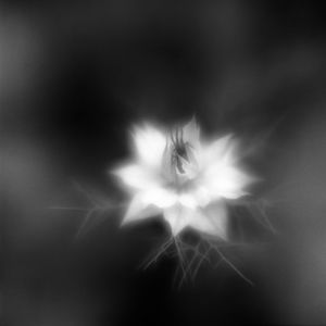 Botanica Obscura #6