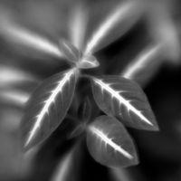 Botanica Obscura #7