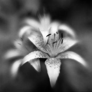 Botanica Obscura #9